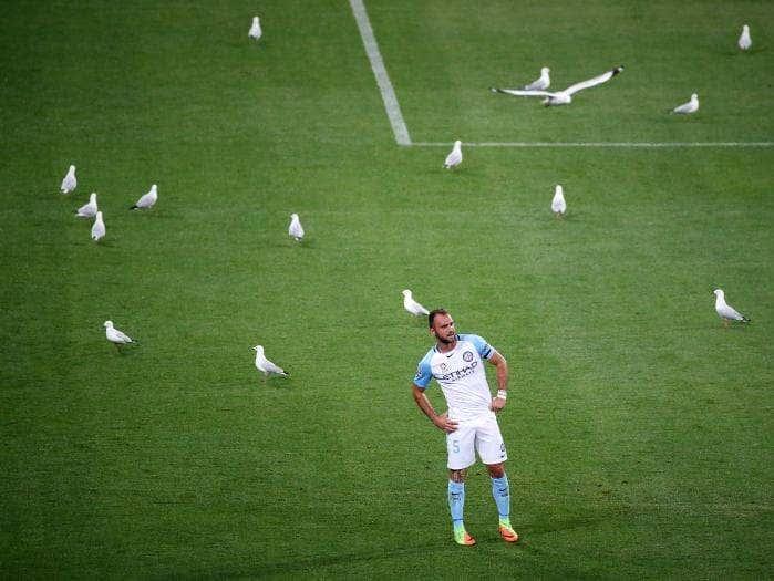 Makaveli Bet - soccer seagulls